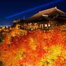 秋の紅葉ツアー特集
