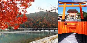 京都初心者にオススメ!伏見、嵐山、金閣寺一巡りのお手軽ツアー!