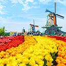 激安オランダ旅行・ツアー