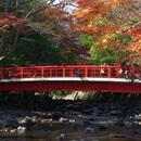 伊豆温泉旅行・ツアー