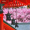 3月・春休みに行く旅行特集