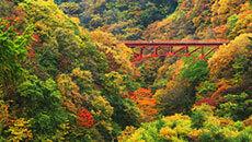10月連休にオススメの温泉旅行・日帰りツアー